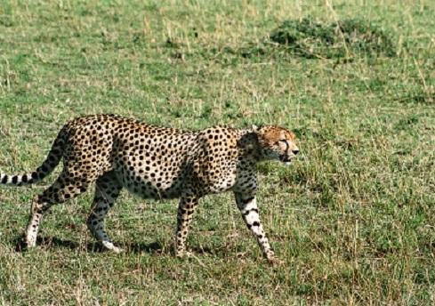 個人旅行の始まりはアフリカ旅行からだった_b0076334_11031649.jpg