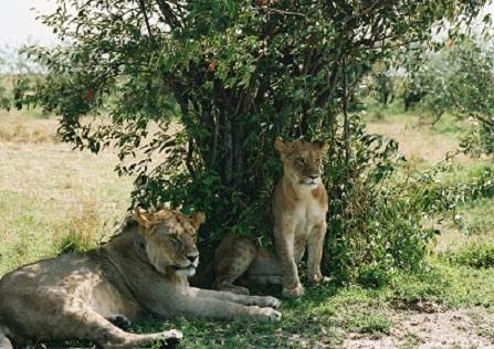 個人旅行の始まりはアフリカ旅行からだった_b0076334_11053305.jpg