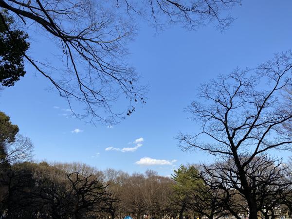 魯山人展、カレーちゃんぽん_f0120980_21054018.jpeg