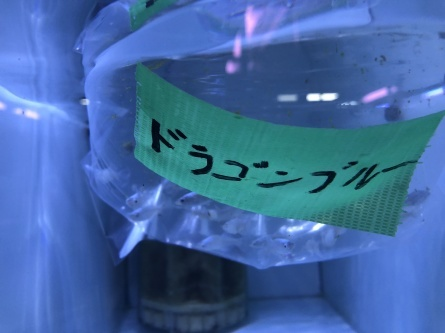 1/16 店長日記_e0173381_18405027.jpg