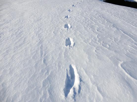 冬の造形_d0366590_11052188.jpg