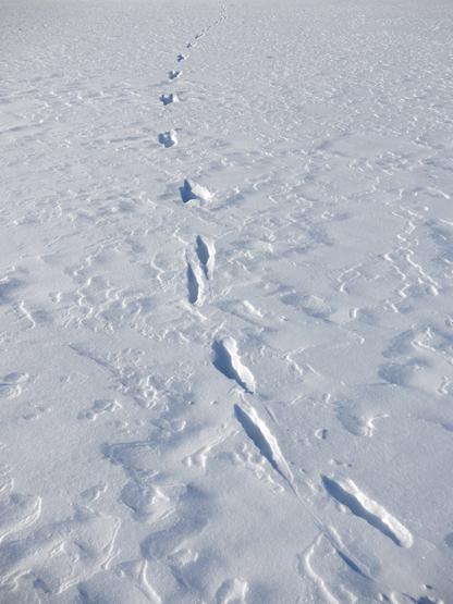冬の造形_d0366590_11052205.jpg