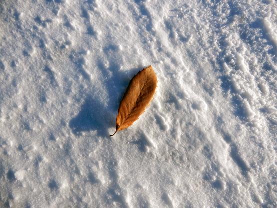冬の造形_d0366590_11094096.jpg