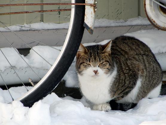 冬の造形_d0366590_11191689.jpg