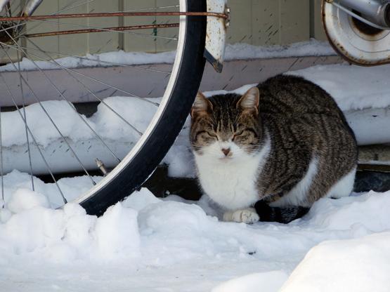 冬の造形_d0366590_11243870.jpg