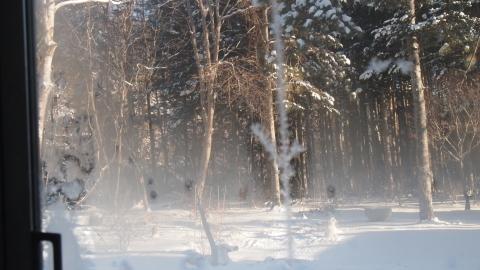極寒・暖気・雪_b0343293_21542759.jpg