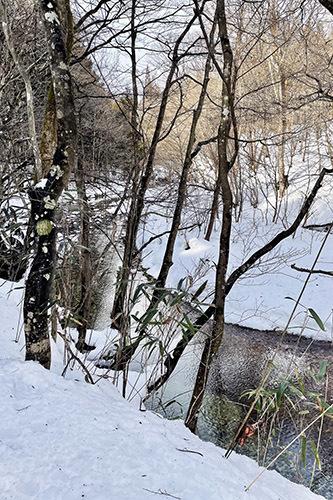 ジムニーで雪の積もった森へ行ってみた_c0148812_20393813.jpeg