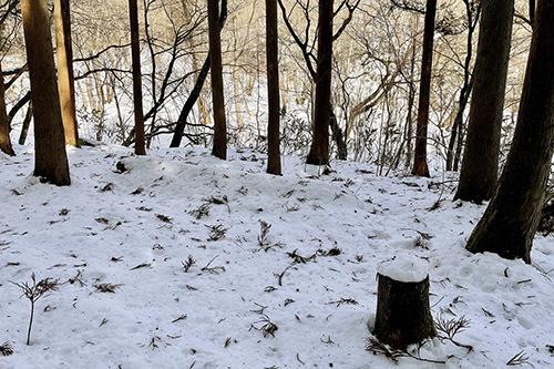 ジムニーで雪の積もった森へ行ってみた_c0148812_20394839.jpeg