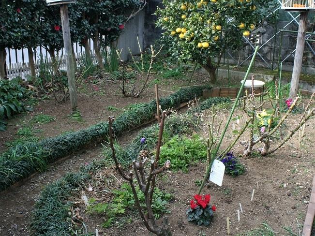 寒中の庭_b0197433_15425294.jpg