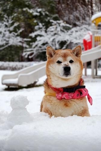 Snow life_b0314043_08371425.jpg