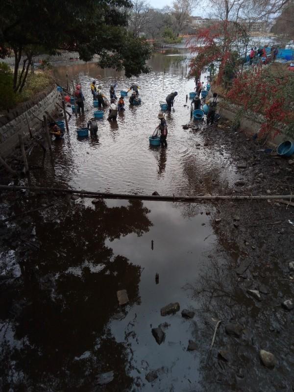 池の水全部抜いてみた_d0367445_19260825.jpg