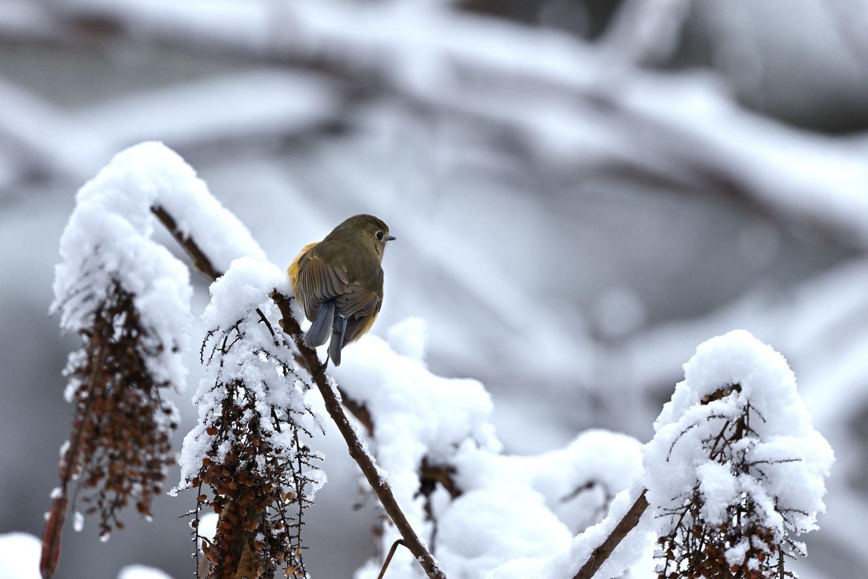 雪の朝_b0399052_17082048.jpg
