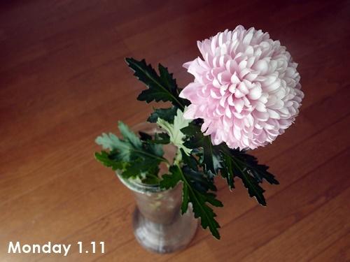 ハナノヒ 1月2週目_c0354352_22154473.jpg