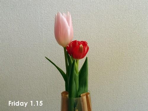 ハナノヒ 1月2週目_c0354352_22272220.jpg