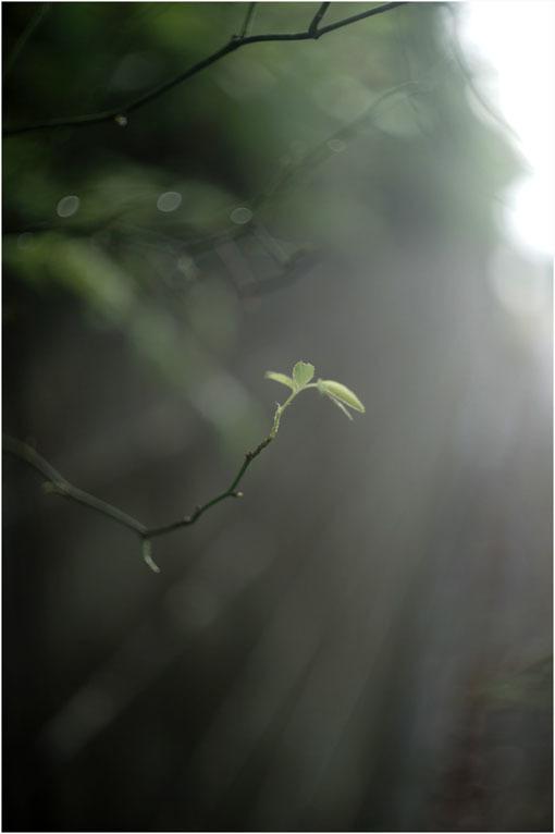 877 プレゼンテーション(2020年6月12日バルター50mmf2.3奈良町を落ち着いて見回し)日光、月光哀れ  _c0168172_11261416.jpg