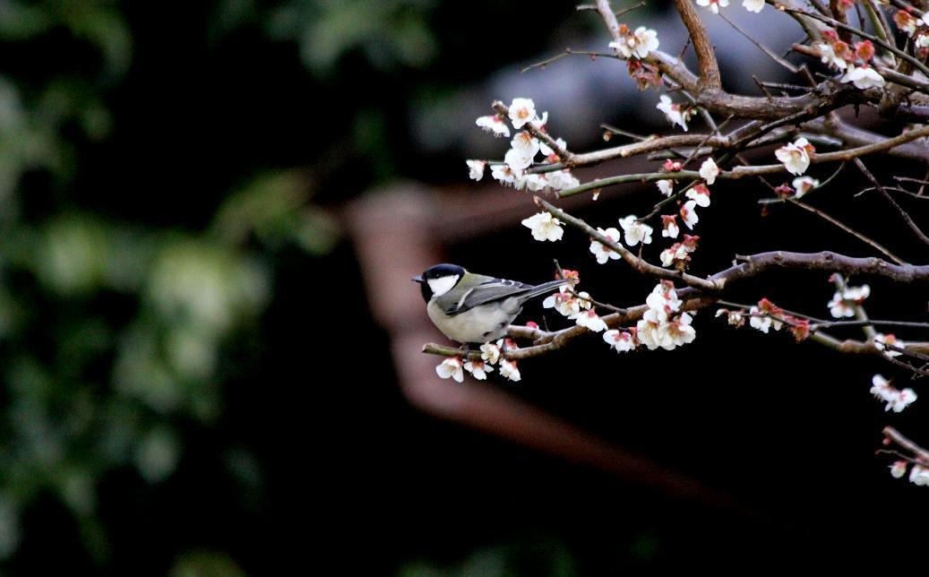 庭への訪問者_a0107574_13183520.jpg