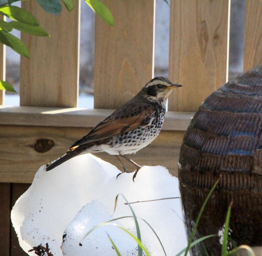 庭への訪問者_a0107574_13191916.jpg