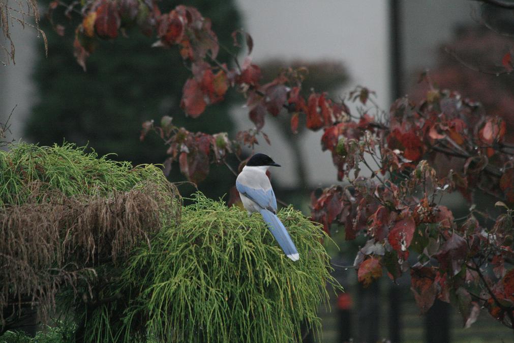 庭への訪問者_a0107574_13200893.jpg