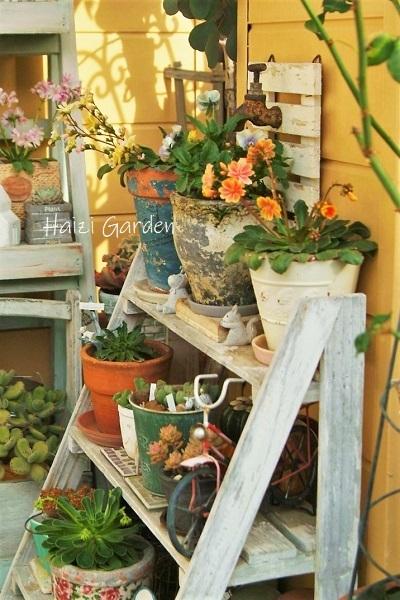 レウィシアの賑わい(*˘︶˘*).。.:*♡ - ハイジの玄関先ガーデン エピソード2♪
