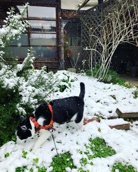 はじめての雪。_d0077603_18264438.jpg