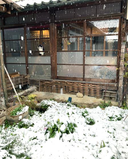 はじめての雪。_d0077603_18265321.jpg