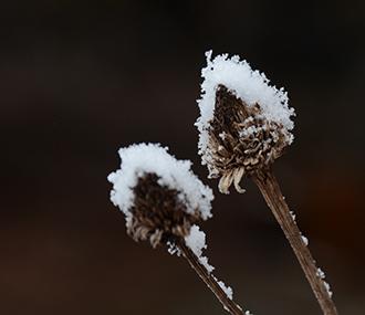 冬型の合間の低気圧と前線の置き土産、小雪で目立つ枯れ木枯れ草_e0005362_07224096.jpg