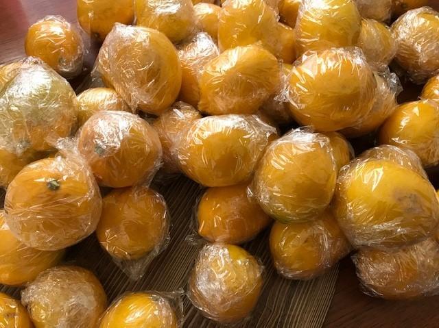 レモン収穫、ラップに包み冷蔵庫で保存1・13_c0014967_07513684.jpg