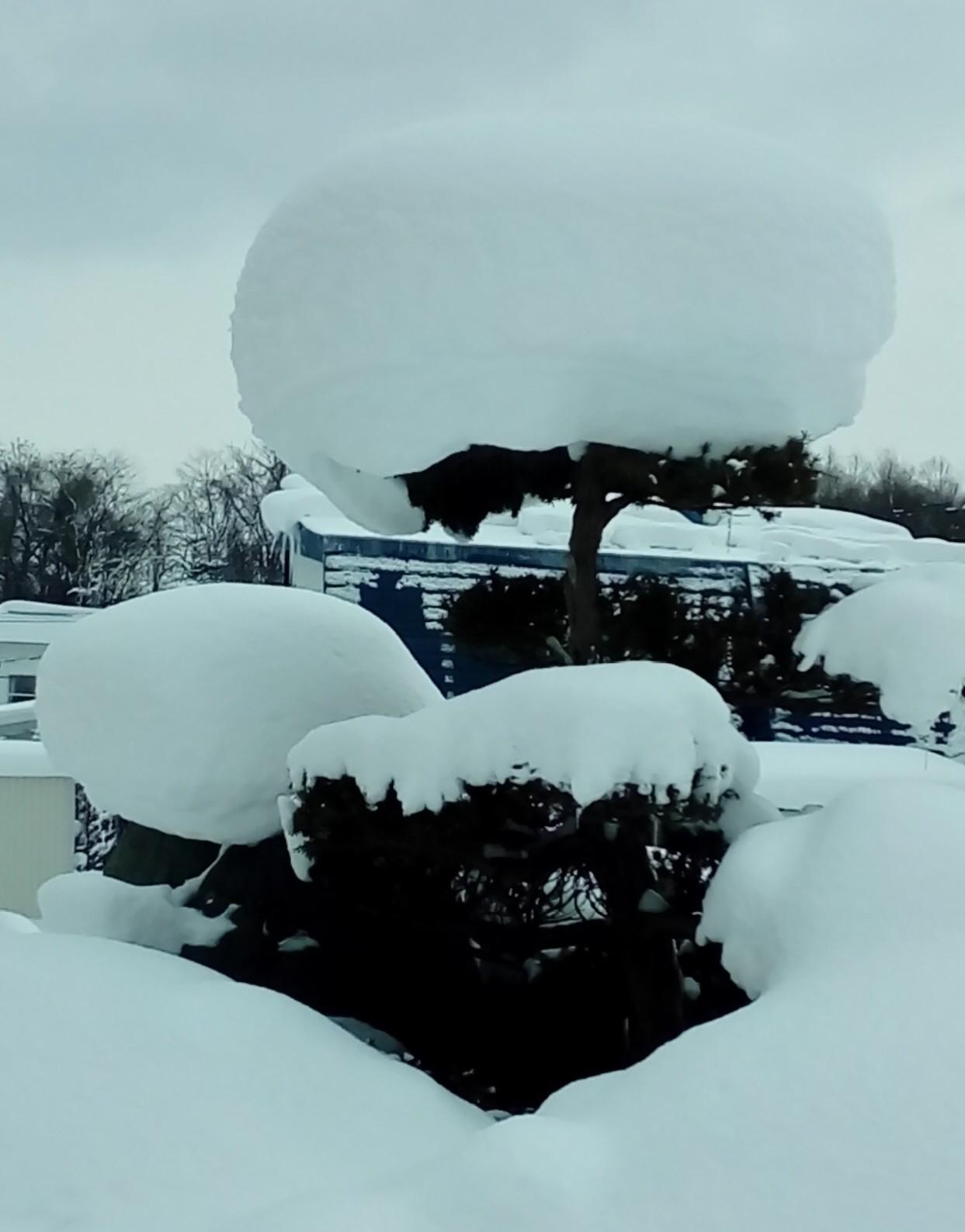 ガリガリ凍った雪のおしゃべり_c0220170_20515311.jpg
