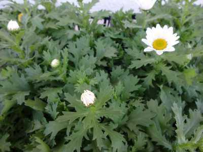 ガーデンふ頭総合案内所前花壇の植替えR3.1.18_d0338682_11074683.jpg