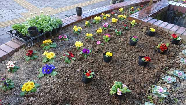 ガーデンふ頭総合案内所前花壇の植替えR3.1.18_d0338682_11084372.jpg