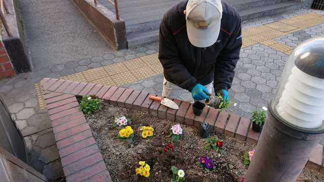ガーデンふ頭総合案内所前花壇の植替えR3.1.18_d0338682_11091540.jpg