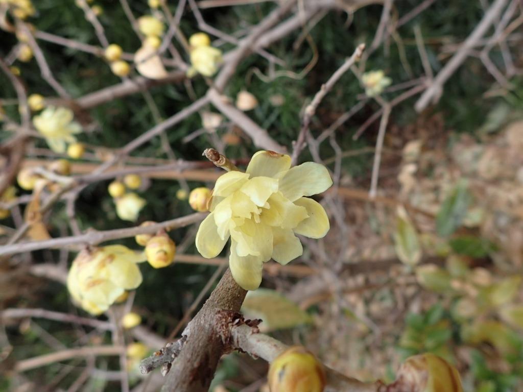 早春の香り_b0049307_14333948.jpg