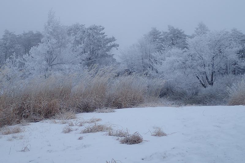 霧氷とオオマシコ_d0053309_17163480.jpg
