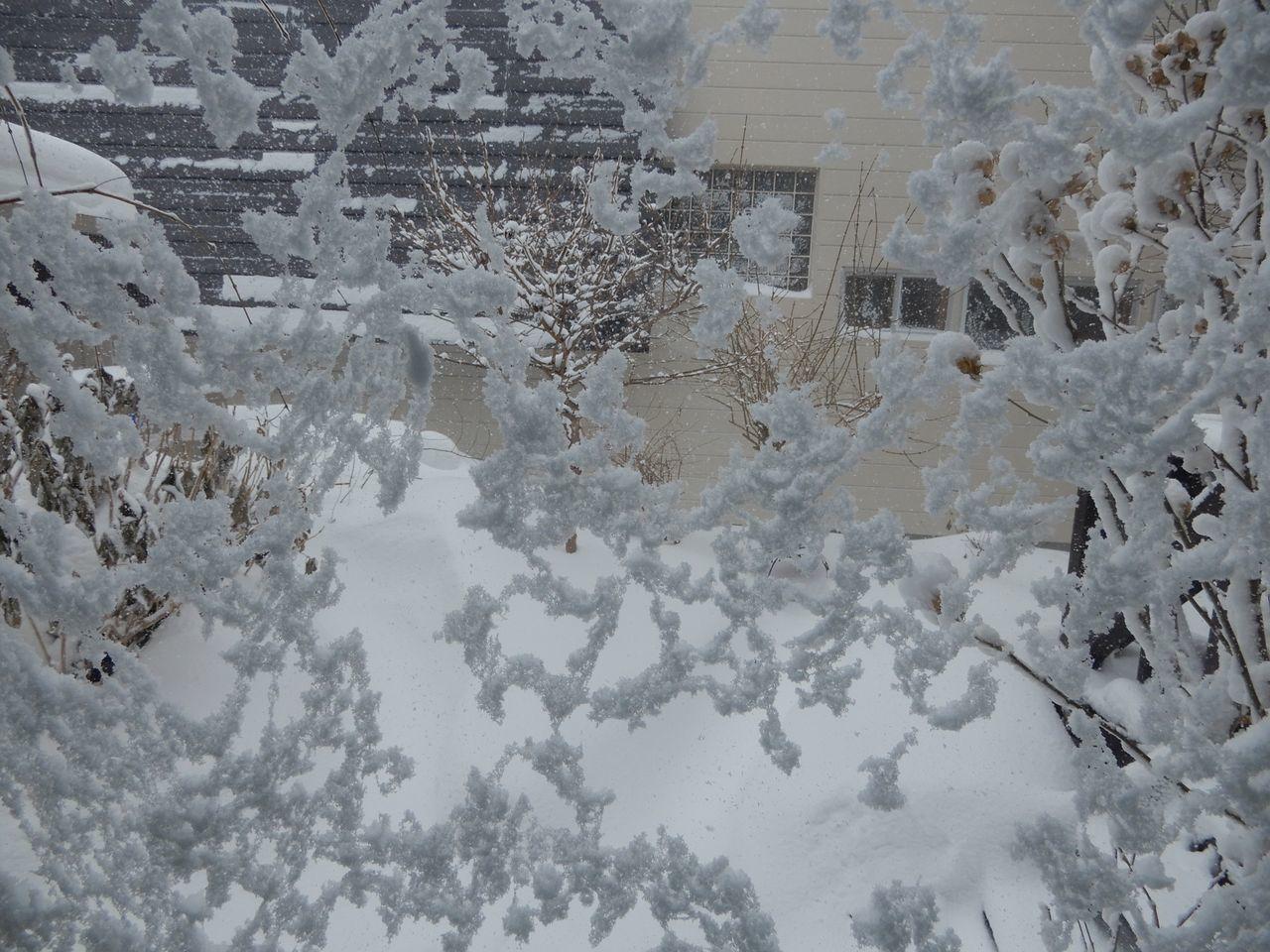 久しぶりの本格的降雪_c0025115_21193755.jpg