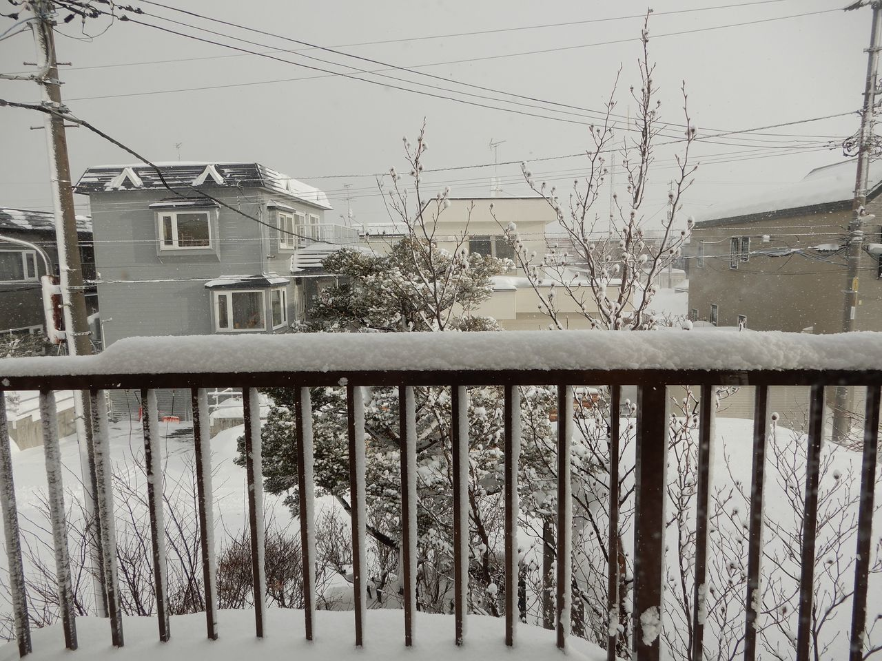 久しぶりの本格的降雪_c0025115_21213936.jpg