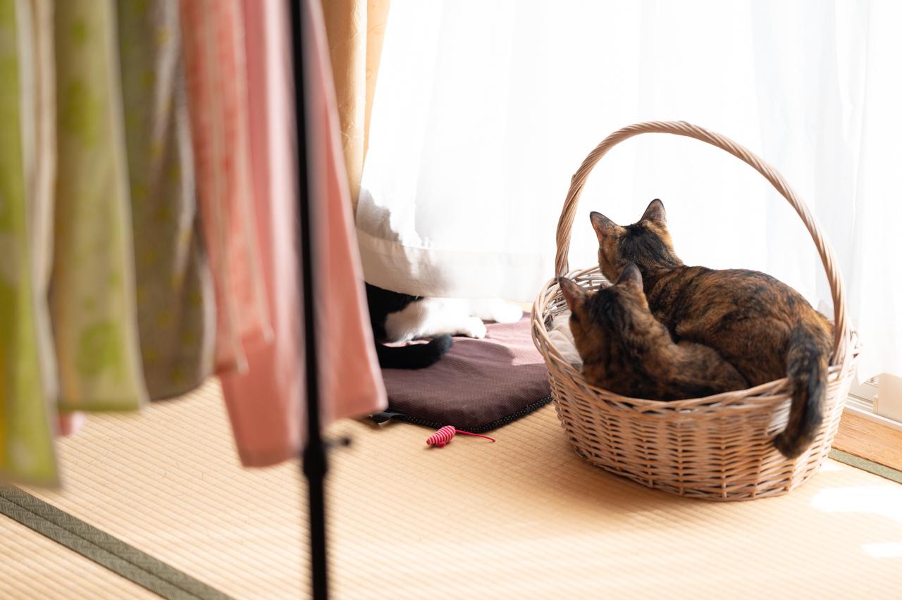 風が強いので、洗濯物を室内に_b0341475_18530540.jpg