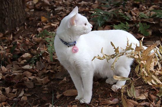 氷の花シモバシラ、メジロ。ときどき猫_e0255509_20581598.jpg