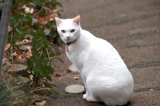 氷の花シモバシラ、メジロ。ときどき猫_e0255509_20582623.jpg