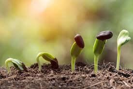 """2021年 春分のオンラインワークショップ """" 春は芽吹き。成長の芽を描きましょう """"_e0257524_11174085.jpg"""