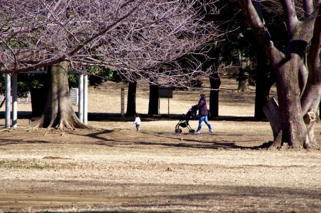 冬晴れの公園_b0191026_22262803.jpeg