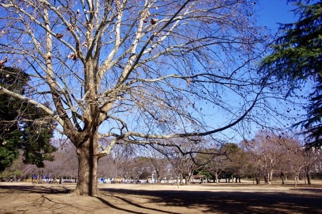 冬晴れの公園_b0191026_22263422.jpeg