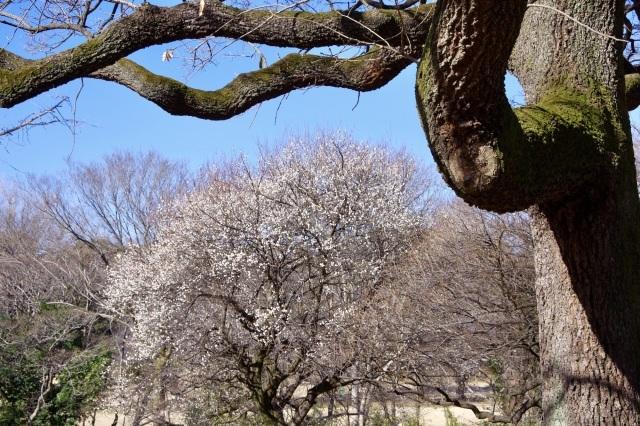 冬晴れの公園_b0191026_22264416.jpeg