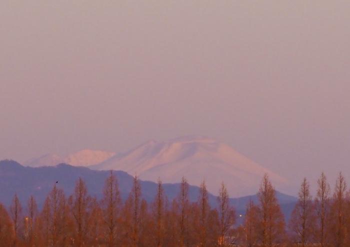 湿原に冬の貴婦人(タゲリ)が現れる_d0290240_16410757.jpg