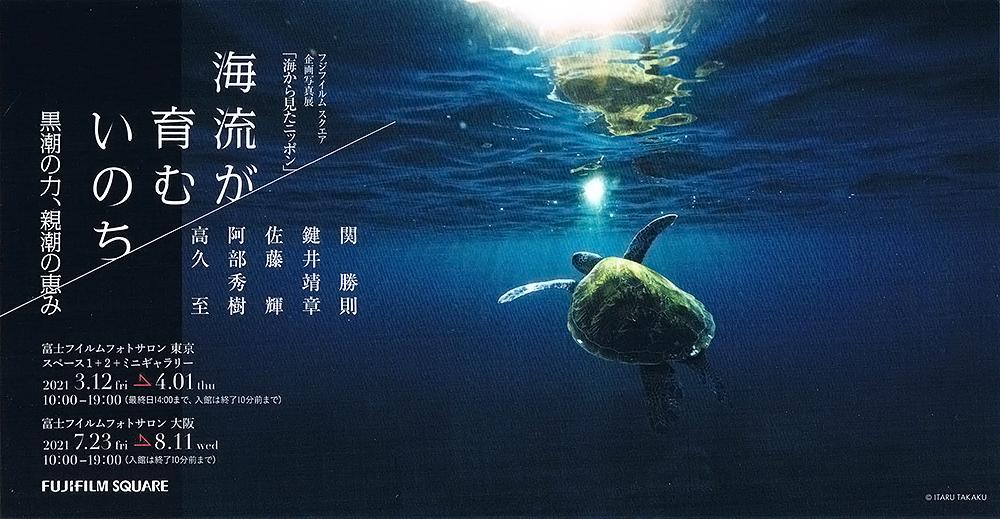 屋久島のザトウクジラのこと_b0186442_10174934.jpg