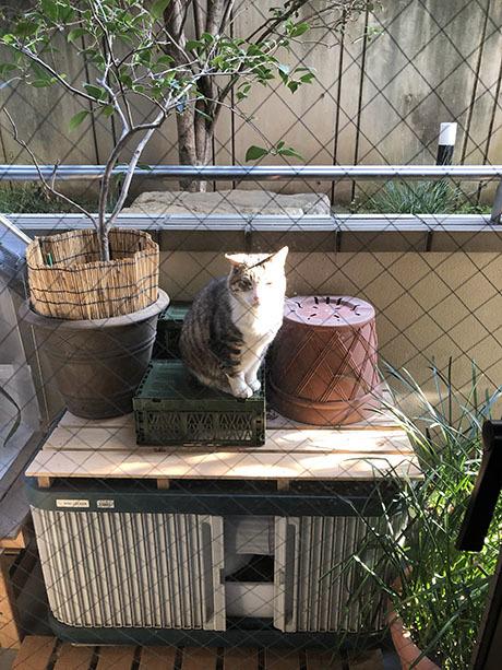 最近の猫事情 91_f0149442_23382763.jpg