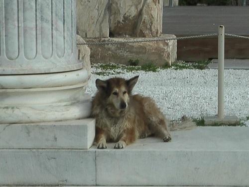 古代遺跡に番犬は必要!_f0037264_09322683.jpg