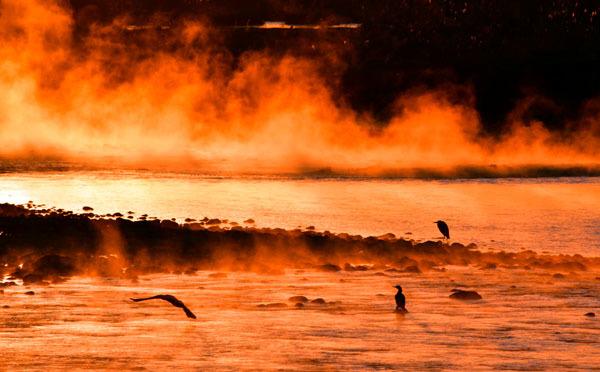 多摩川の川霧・大寒の朝_f0173596_08032285.jpg
