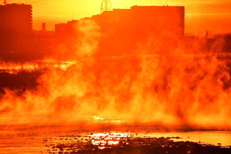 多摩川の川霧・大寒の朝_f0173596_08041931.jpg