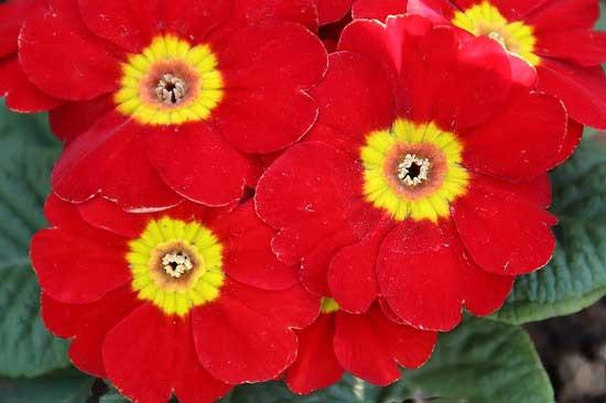 シジュウカラと、アトリ。花壇の花_e0255509_21225549.jpg