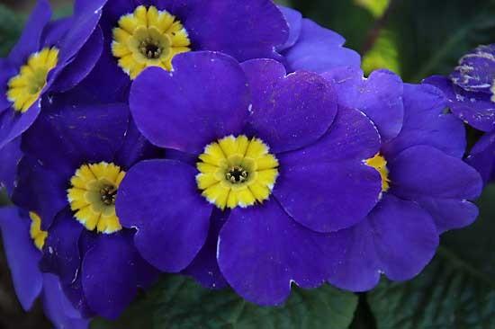 シジュウカラと、アトリ。花壇の花_e0255509_21235646.jpg